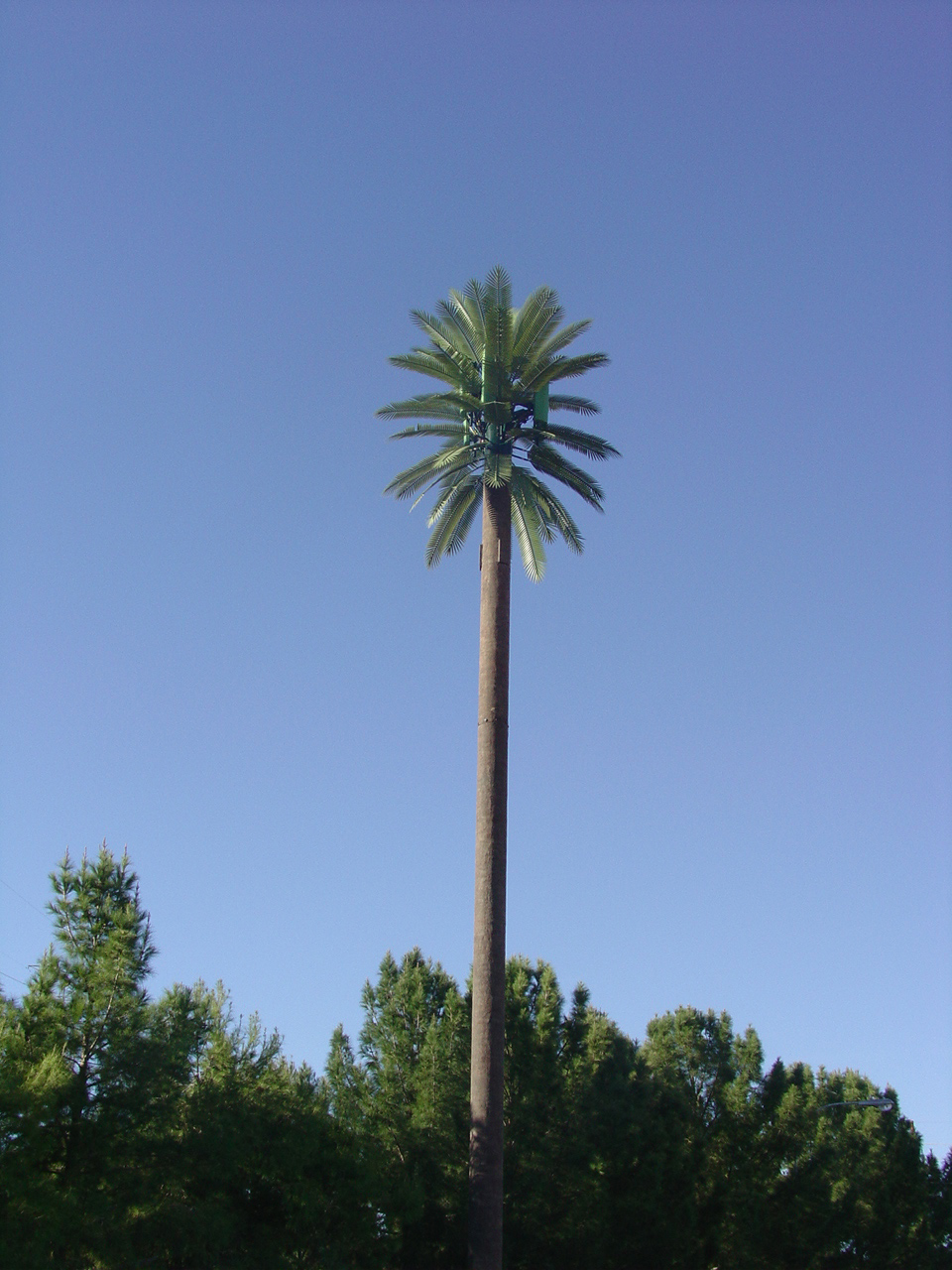 image of fabricated  cell tower palm tree