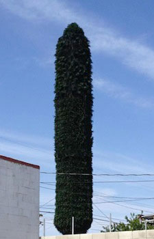 image of a artificial cell tower cactus