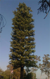 image of a fake palm tree cell tower