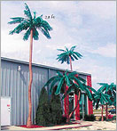 Click here to see our line of Outdoor Palm Trees