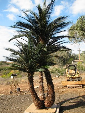 image of a artificial  palm tree